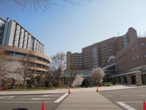 国立成育医療研究センター病院・成育しせい保育園